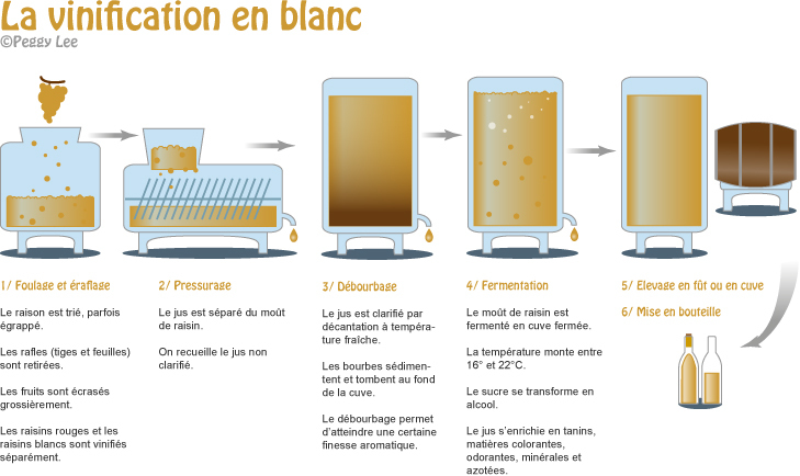Vinification du vin blanc