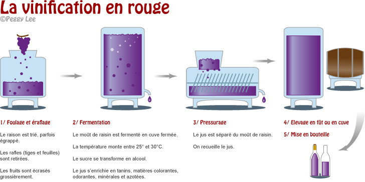 Vinification du vin rouge